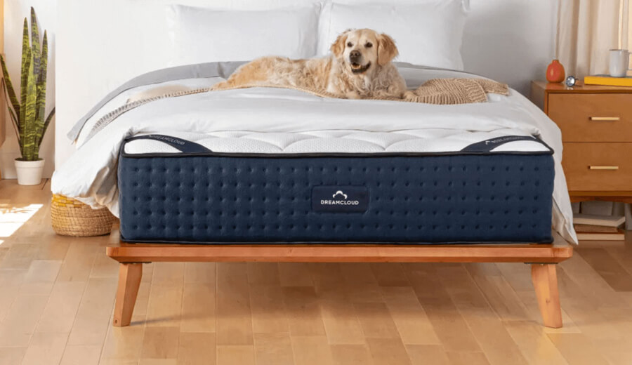 Dog laying down on DreamCloud mattress.